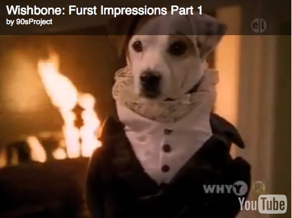 Darcy can perro